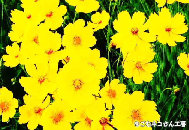 f:id:nagomunekosan_kobo:20210709183808j:plain