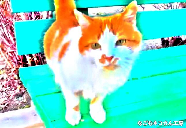 f:id:nagomunekosan_kobo:20210713200523j:plain
