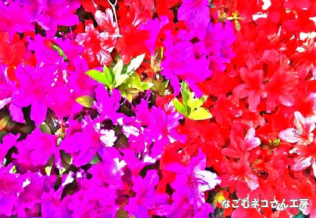 f:id:nagomunekosan_kobo:20210716191058j:plain