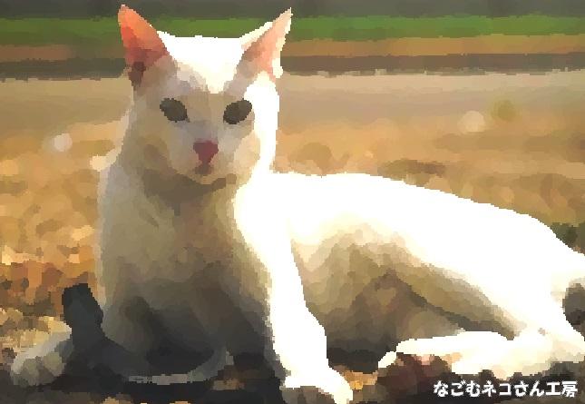 f:id:nagomunekosan_kobo:20210829015019j:plain