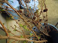 f:id:nagomusi:20120306101120j:image