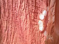 f:id:nagomusi:20120418121255j:image