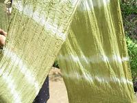 f:id:nagomusi:20120516122137j:image