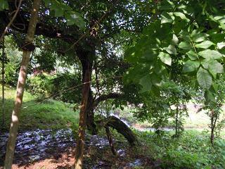 f:id:nagomusi:20120712152328j:image
