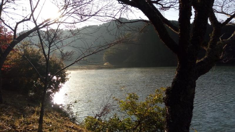 f:id:nagomusi:20171110081227j:image
