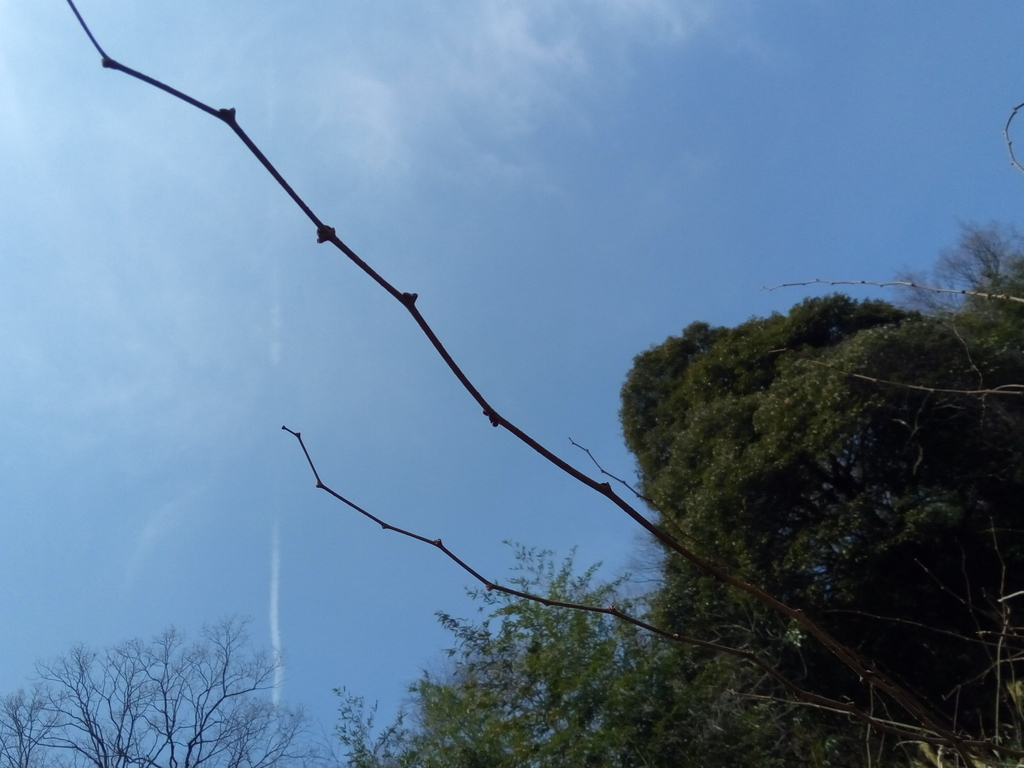 f:id:nagomusi:20190225113903j:plain