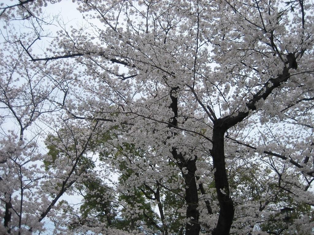 f:id:nagoyakanagoya:20180327221624j:plain:w450