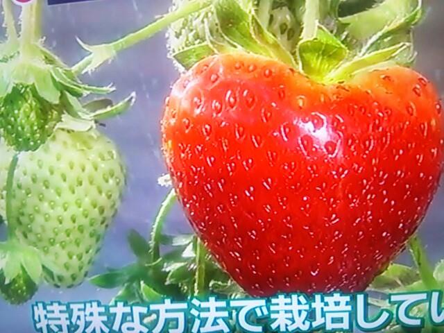 f:id:nagoyakinpen:20170202111812j:plain