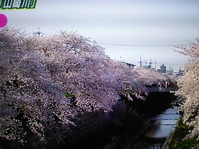 f:id:nagoyakinpen:20170326144337j:plain