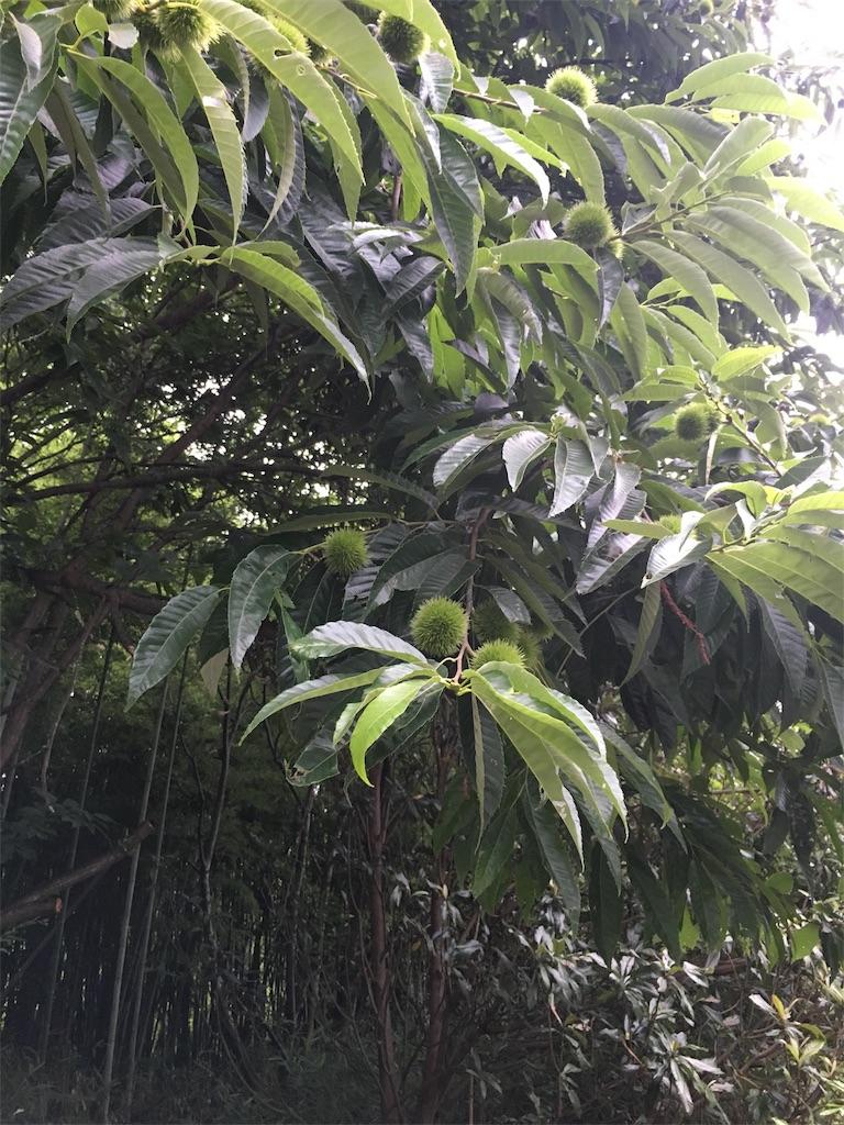 f:id:naisu496:20170712133351j:image