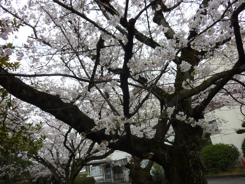f:id:naitoblog:20170405161846j:plain