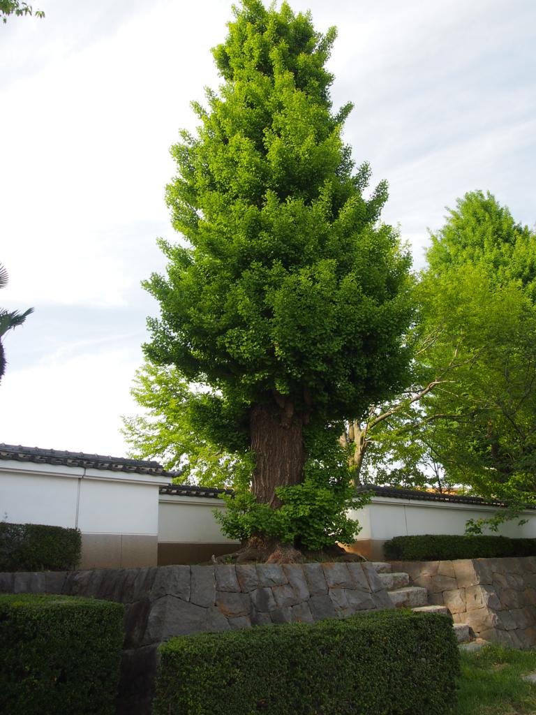 f:id:nakaaki0815:20160911232927j:plain