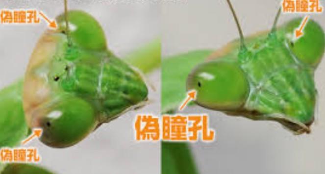 f:id:nakaburo:20200616164029j:plain