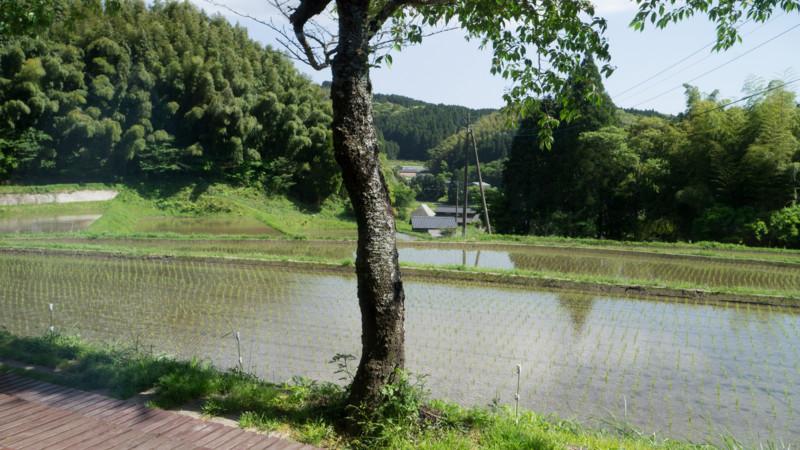 f:id:nakagawa_che:20170515144627j:plain