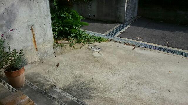 f:id:nakagawahiroe:20170626092143j:plain