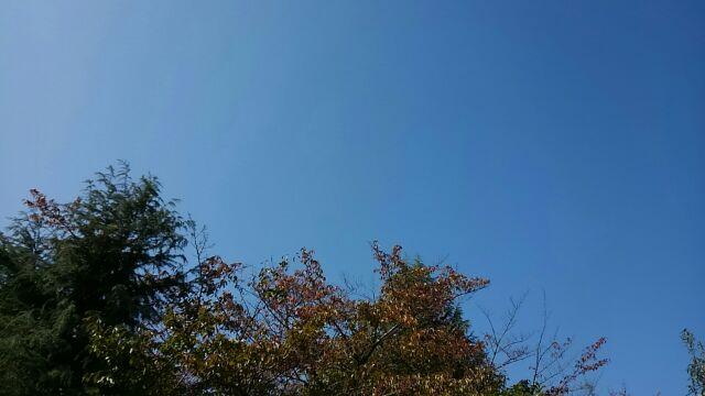 f:id:nakagawahiroe:20171027101555j:plain