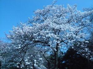 f:id:nakagawamasami:20080327020722j:image:right