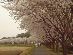 f:id:nakagawamasami:20090408233324j:image:right