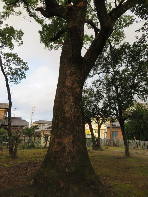f:id:nakaimamarunosuke:20200104111438j:plain