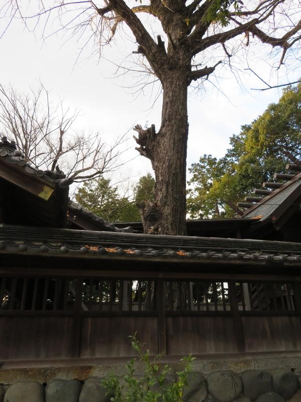 f:id:nakaimamarunosuke:20200104111653j:plain