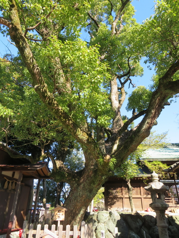 f:id:nakaimamarunosuke:20200104133409j:plain