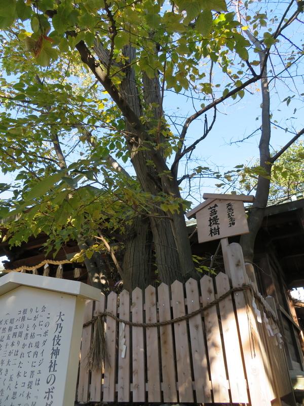 f:id:nakaimamarunosuke:20200104133722j:plain