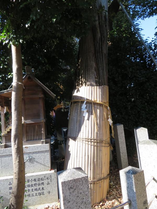 f:id:nakaimamarunosuke:20200104144720j:plain