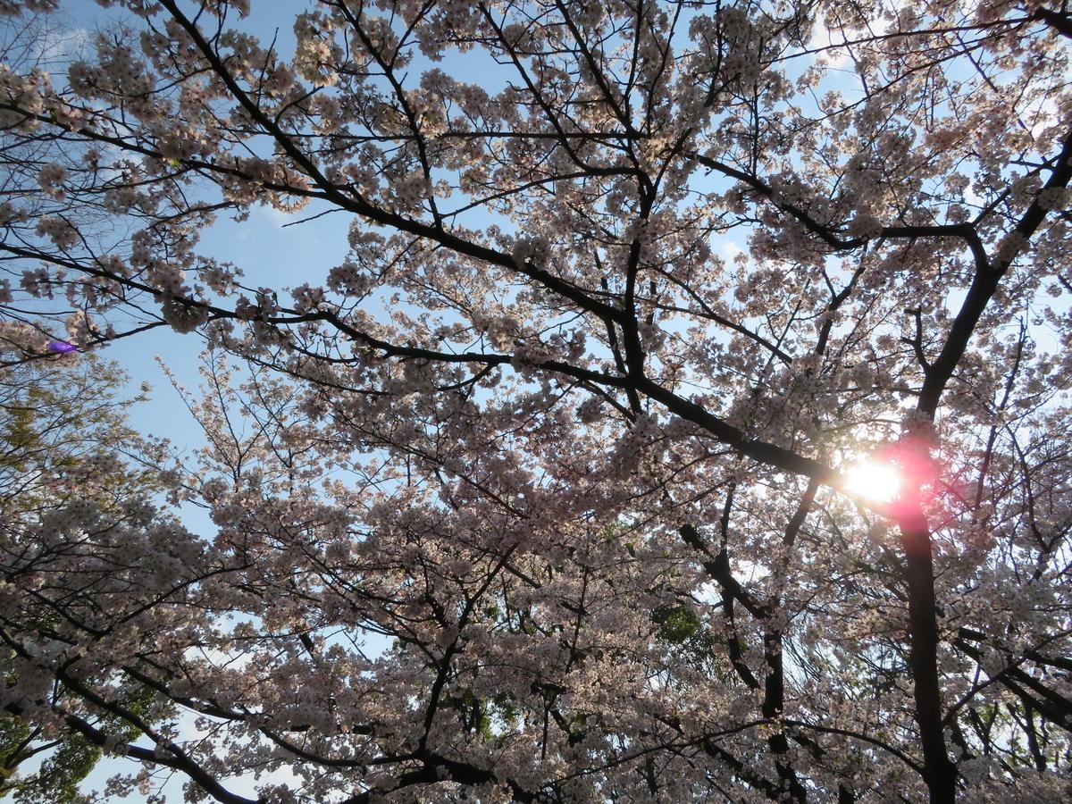 f:id:nakaimamarunosuke:20200405214429j:plain