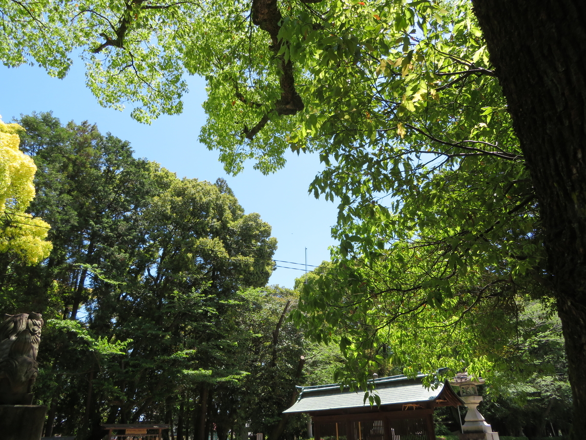f:id:nakaimamarunosuke:20200517092045j:plain