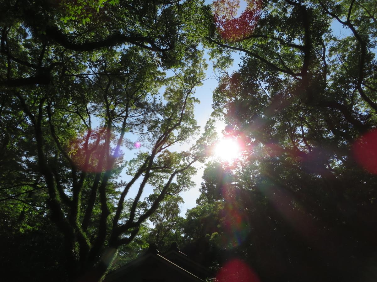 f:id:nakaimamarunosuke:20200625183531j:plain