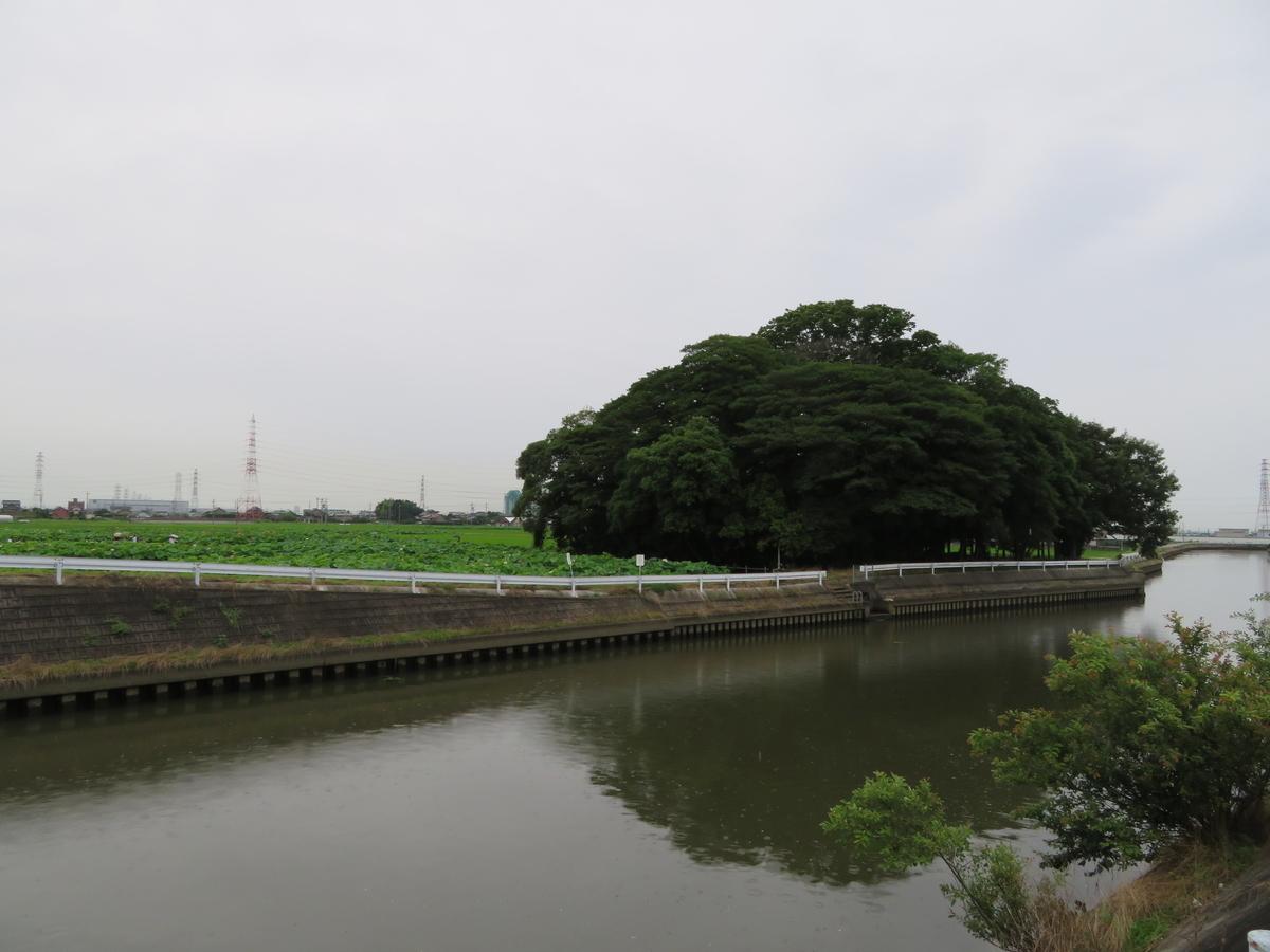 f:id:nakaimamarunosuke:20200703194724j:plain