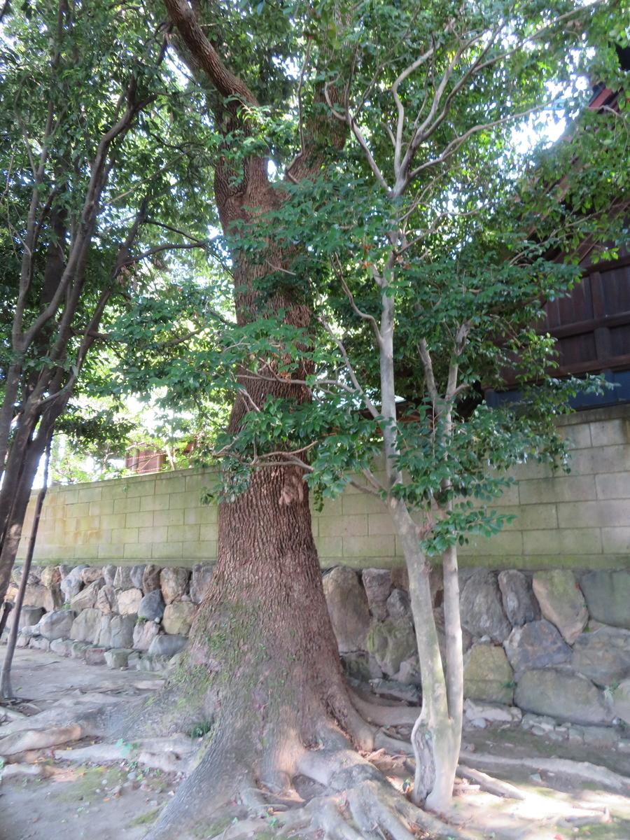 f:id:nakaimamarunosuke:20201029222602j:plain