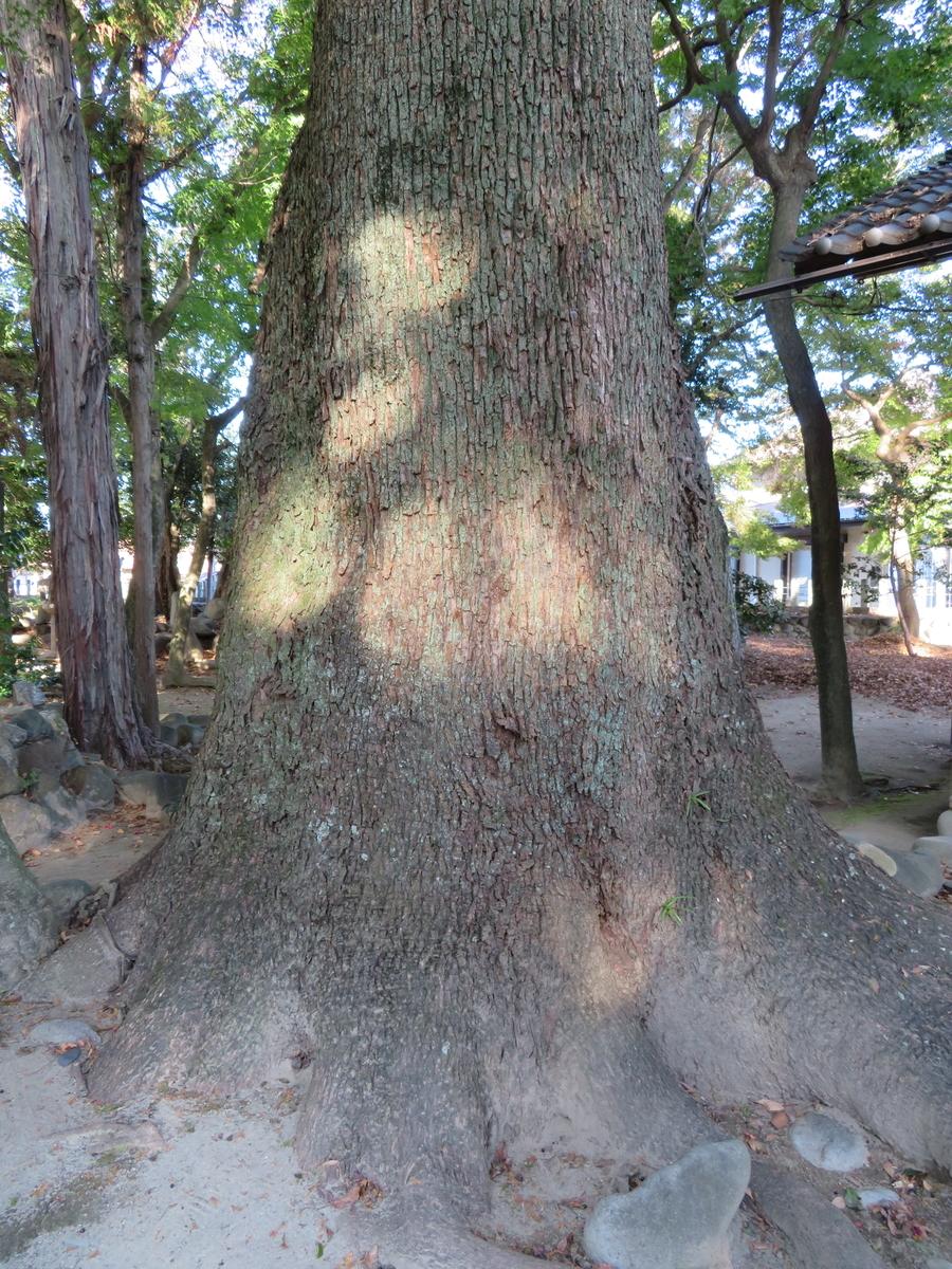 f:id:nakaimamarunosuke:20201122104345j:plain