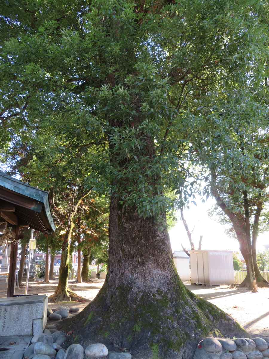 f:id:nakaimamarunosuke:20201122112948j:plain