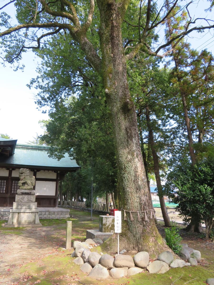 f:id:nakaimamarunosuke:20210404103234j:plain
