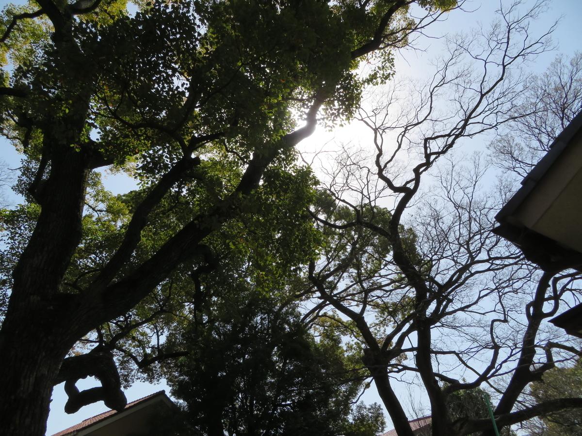 f:id:nakaimamarunosuke:20210731221618j:plain