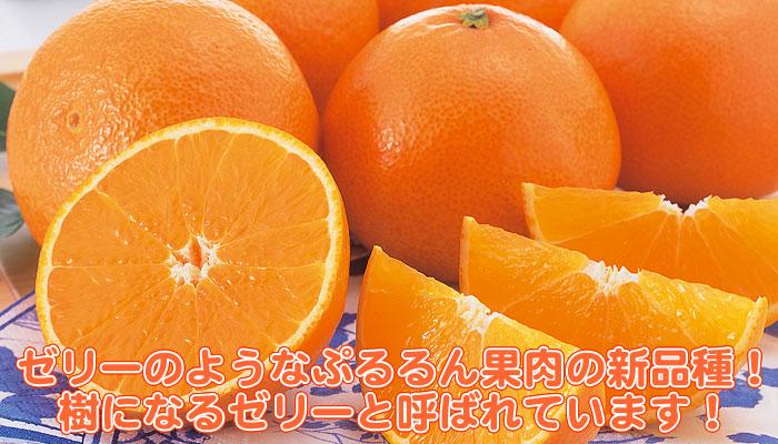 f:id:nakaji999:20140107005809j:plain