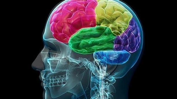 大脳基底核と運動