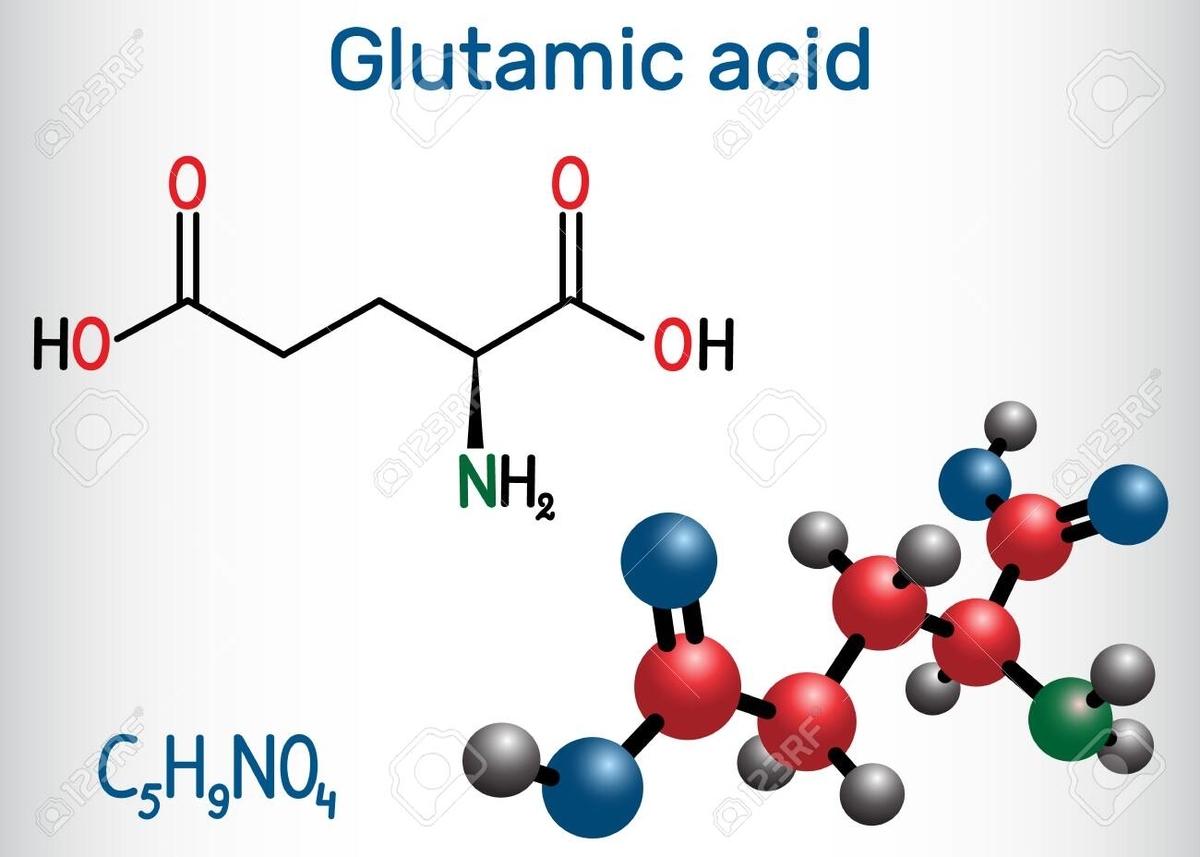 グルタミンの役割(高強度運動時の免疫低下現象の予防、試合期の骨格筋維持、アンモニア蓄積による中枢性疲労の軽減につながる)