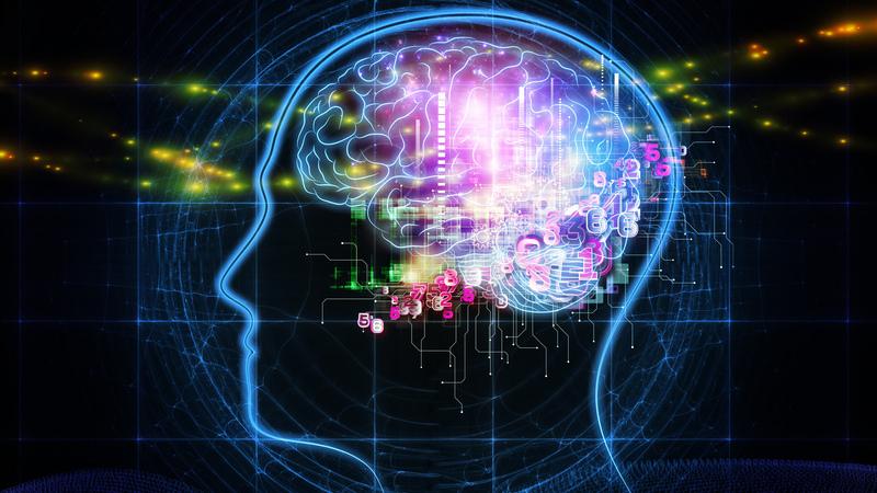 脳と認知機能における運動の役割(運動により学習・記憶を司る海馬での脳由来神経栄養因子(BDNF;Brain Derived Neurotrophic Factors)が増加することが明らかされている)