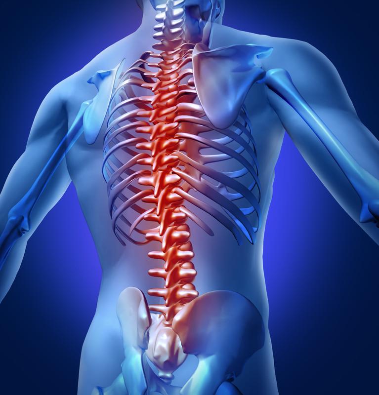 脊椎の運動力学の日内変化が及ぼす影響(起床後わずか30分で、椎間板は1日の高さの54%を失い、1時間以内に水分の90%が失われる)