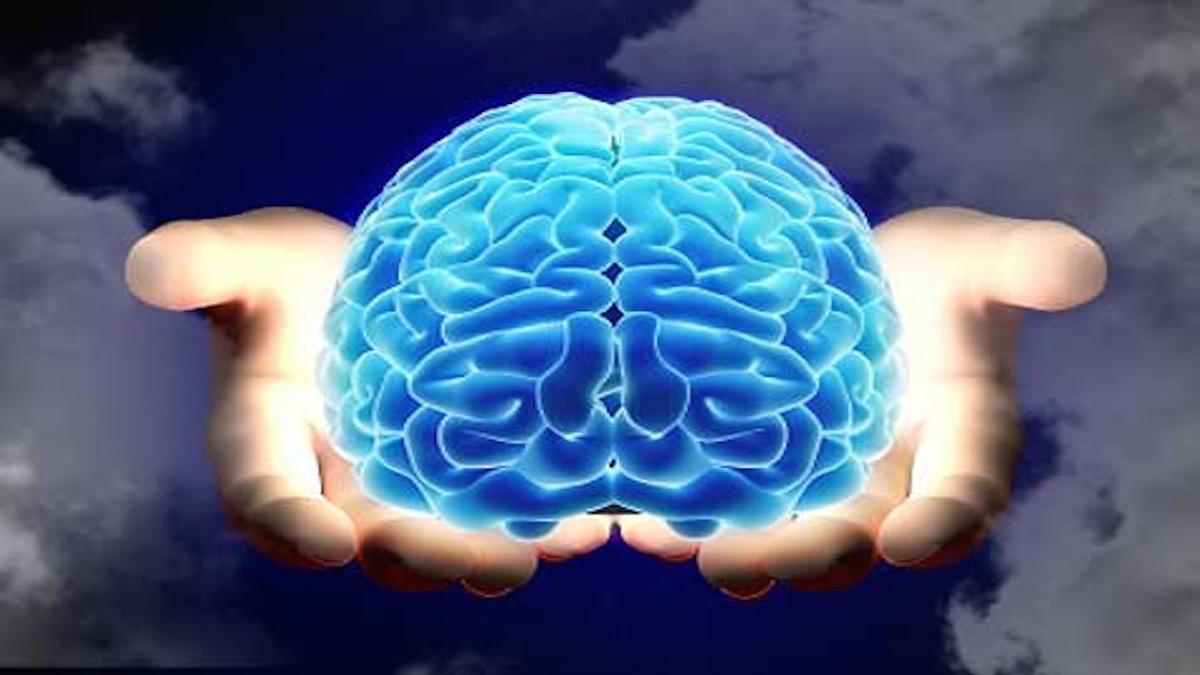 脳・認知機能(海馬と側頭葉の容積は体力の高い成人のほうが大きく、運動トレーニングにより海馬の血流循環が増加することが明らかになってきている)