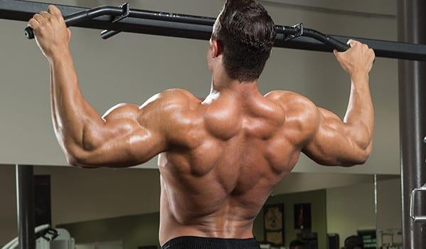 運動による筋肥大経路(機械的刺激が標的細胞に形質導入し分解よりも合成に有利に働くよう筋タンパク同化シグナル伝達経路を刺激する)
