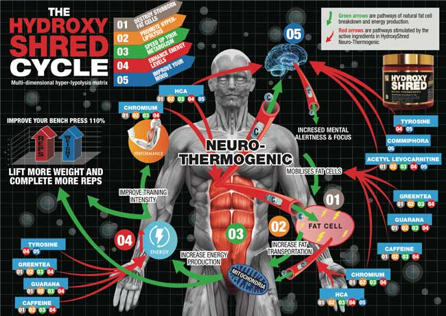 βヒドロキシβメチルブチレートと無酸素性運動(ロイシンの代謝産物であるHMBは骨格筋の損傷修復のスピードを速め、レジスタンストレーニング後の筋力やパワーおよび筋肥大を増大させる)