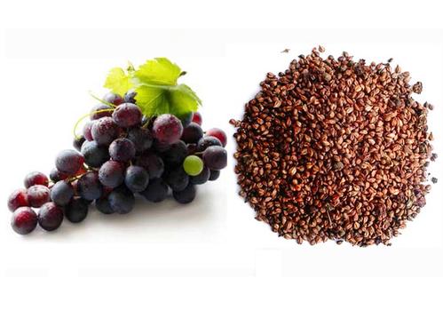 ブドウ種子抽出物(400mg/日を4週間摂取した選手は、身体パフォーマンスと爆発的パワーが有意に増加したが、これはクレアチンキナーゼの減少とヘモグロビンの増加によるものとされる)