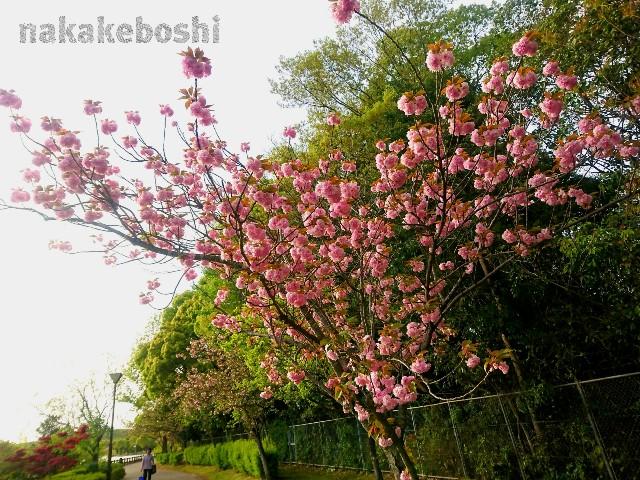 f:id:nakakeboshi:20180416183146j:image