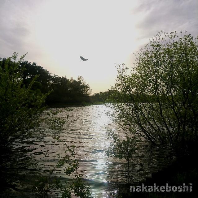 f:id:nakakeboshi:20180416183152j:image