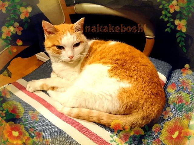 f:id:nakakeboshi:20180424173354j:image