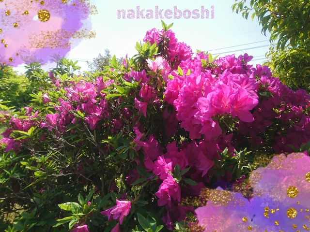 f:id:nakakeboshi:20180428115558j:image