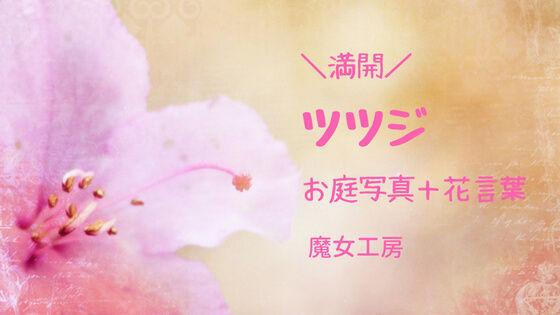 f:id:nakakeboshi:20180520163332j:plain